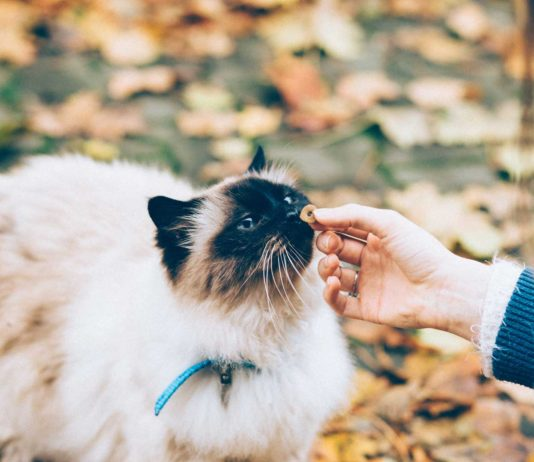 What-You-Should-Know-About-Calming-Cat-Treats-on-successtuff