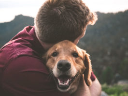 Trusting-Relationships-and-Building-Bonds-with-Pets-on-successtuff
