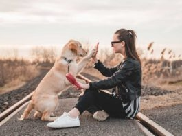 Top-Four-Best-Workouts-You-Can-Do-With-Your-Dog-on-successtuff